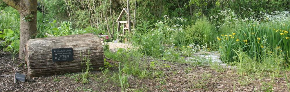 Slide – Woodland Garden